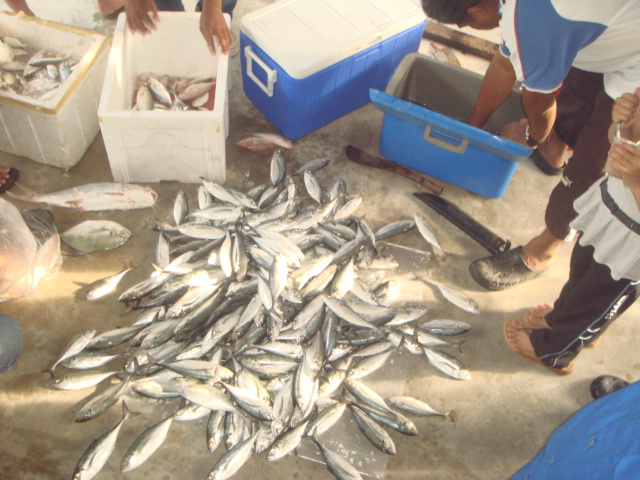 Makan Ikan Jer Hari-Hari